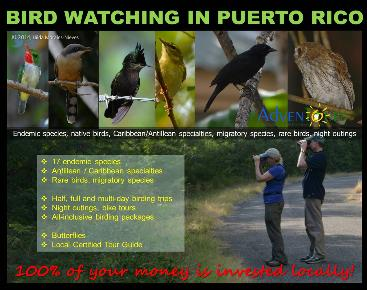 BIRDING TRIPS AND TOURS IN PUERTO RICO